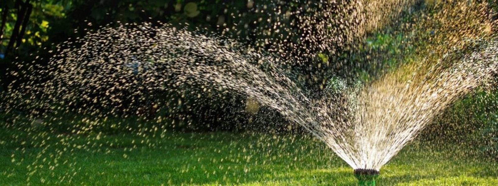 Simple tips to conserve water during Texas summers